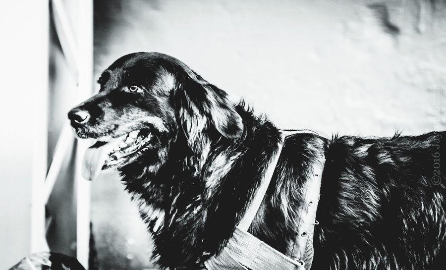 Photo Pictures Photooftheday Black & White Blackandwhite Photographer Nikonphotography Greatest_shots Picoftheday Cute Dog Dogstagram Dogs Petstagram Pet Photography  Brasilgreatshot