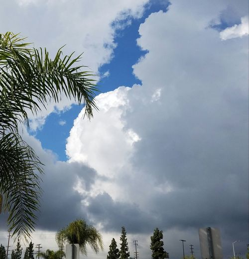 Natural Light Cloud - Sky Palm Tree Outdoors Beauty In Nature Enjoying The Day Street Photography Palm Tree Walking The Streets Streetview The City Light Copy Space Urban Exploration Illuminated Dramtic Clouds Fine Art Photography Still Life Cloudscape Dramatic Lighting Nature EyeEm Best Shots Relaxing Light And Shadow Nature Day