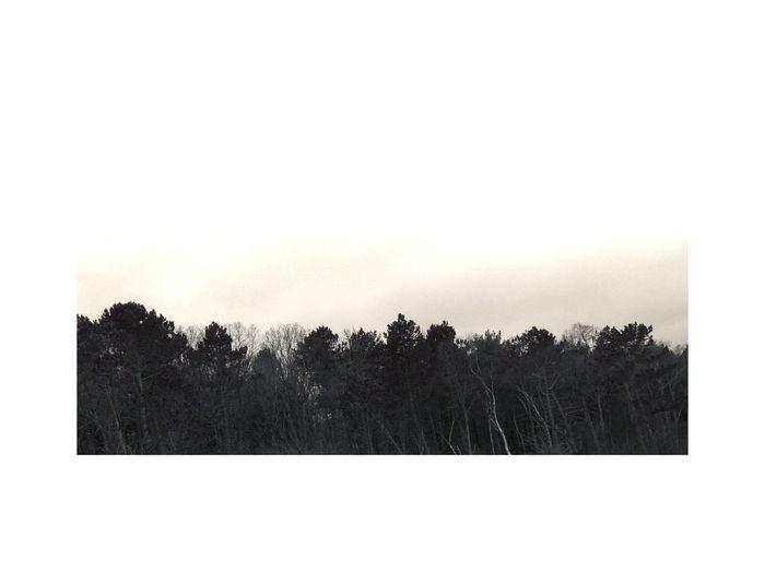 Tree Portrait Minimallandscape Nordic Light IPhoneography