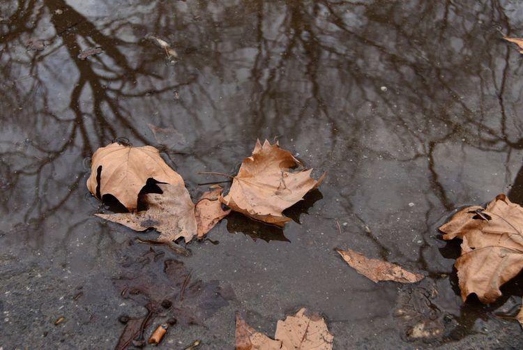 Lost Leaf Sand