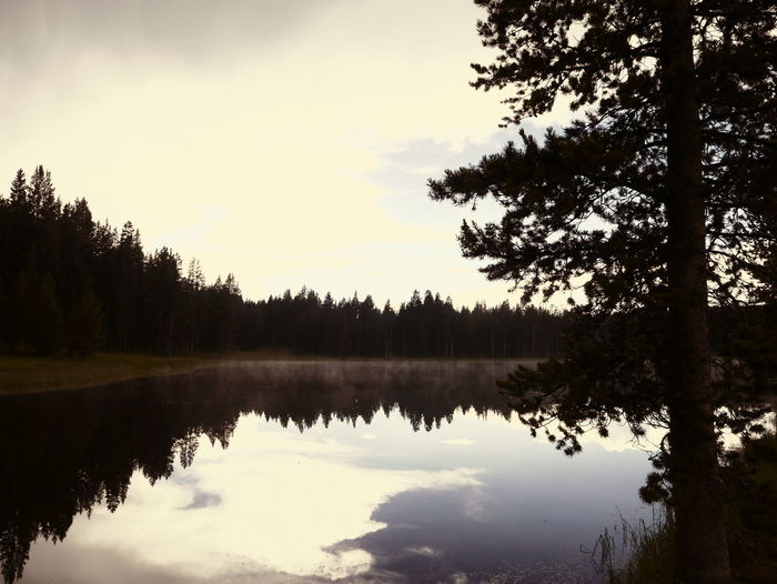 Sky Reflected In Water Sky Reflection Beauty In Nature Dawn Dusk Dusk Lake Dusk Light Forest Lake Reflection Scenics Silhouette Sky Reflecting In The Lake Tranquil Scene Tree Water