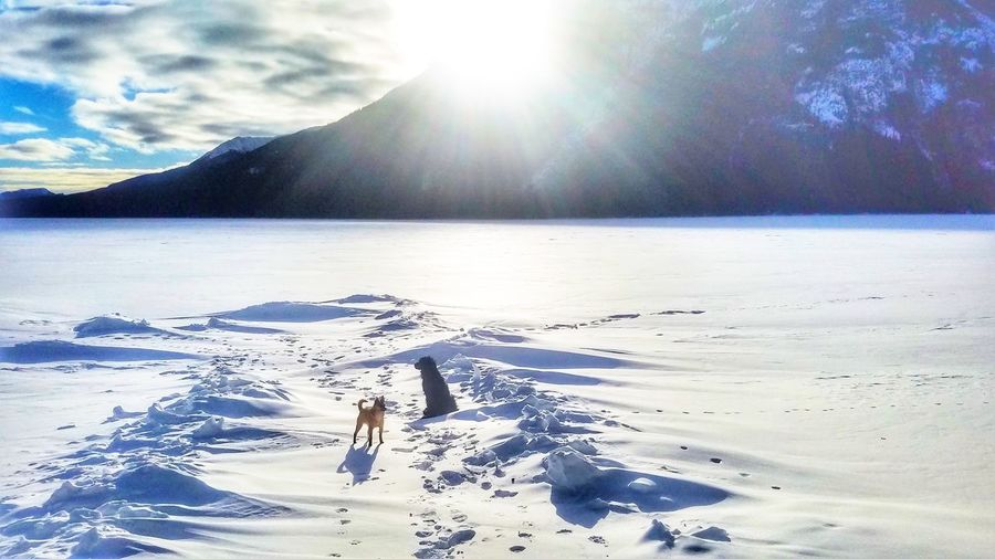Snowdog Swimminginsnow Snow British Columbia BlackDog Schipperkechihuahua Frozen Lake Wintersun Wintersunshine Happydogs Mountain Water Tree Cold Temperature Winter Forest Sunlight Sunset Iceberg - Ice Formation