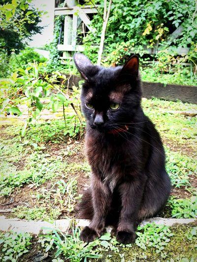 cat. so cute.