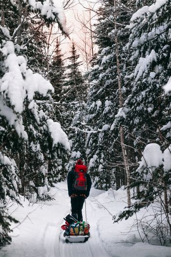 Carrying goods for a night in a cabin! Wintertime Winter Wonderland Frozen Trees Trees And Sky Under The Tree Snowshoe Sunset Tree Warm Clothing Snow Cold Temperature Winter Full Length Rear View Weather Adventure Headwear Deep Snow Powder Snow Pine Woodland Pine Tree Snowfall Snowing
