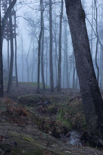 Dark Rain Rain Drops Steam Cool Colors Eerie Fog Foggy Road Forest Nature No People Quiet Scene Rainy Stream Tree Trunk WoodLand