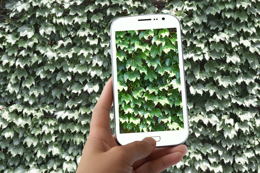 Close-up Communication Connection Day Growth Holding Human Body Part Human Hand Mobile Phone Nature One Person Outdoors People Photographing Plant Portable Information Device Real People Screen Smart Phone Technology Wireless Technology