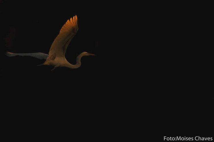 One Animal Animal Wildlife Animals In The Wild Bird Animal Themes Black Background Nature
