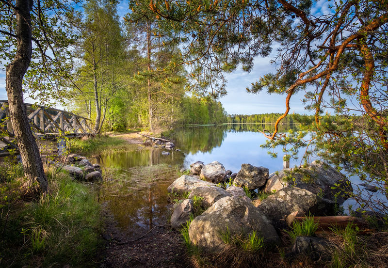 Landscape from national park at bright summer morning in Liesjärvi, Finland. Beauty In Nature Bridge Bright Day Forest Grass Green Color Lake Lake View Lakeshore Landscape Morning Light National Park Nature No People Outdoors Reflection Scenics Sky Stone - Object Tranquil Scene Tranquility Tree Water Wooden