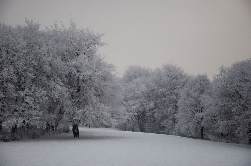 Bare Tree Beauty In Nature Cold Temperature Day Full Length Growth Landscape Nature Outdoors Real People Scenics Sky Snow Snowing Tranquil Scene Tranquility Tree Weather Winter