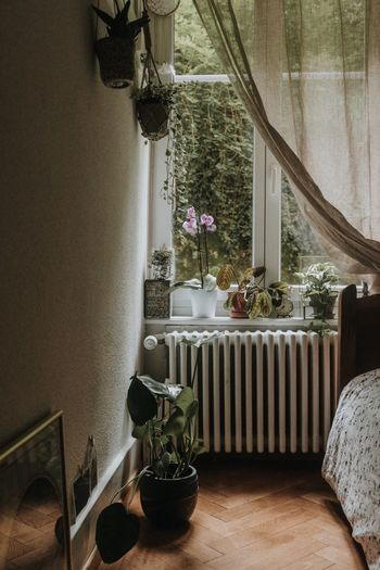 No place I'd rather be 🌿💛 Home Interior Indoors  Curtain Potted Plant Window Home Showcase Interior Bedroom Pinterest Urban Jungle Still Life Home Is Where The Art Is Plant EyeEm Nature Lover EyeEm Best Shots Plants 🌱 Greenery Scenery Still Life Photography Investing In Quality Of Life EyeEmBestPics The Week On EyeEm Monstera Deliciosa