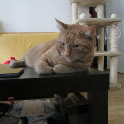 I Love My Cat Mein Liebling Februar 2014 Canon Ixus 115 HS