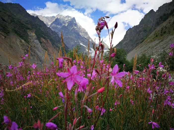 Georgia Hiking Mestia, Georgia 🇬🇪 Adventure Beauty In Nature Chalaadi Chalaadi Glacier Flower Kaukasus Mountains Mestia Mountain Mountain Range Nature No People Outdoors Plant