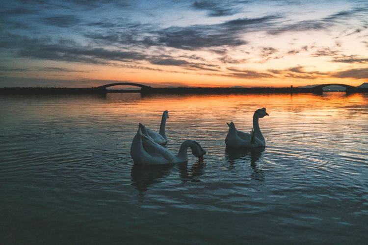 Ducks swimming in sea during sunset