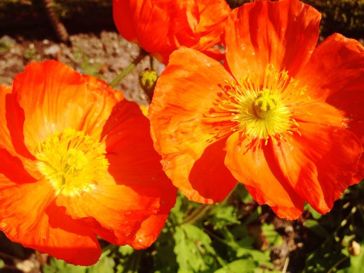 Beautiful Flower Nature Garden