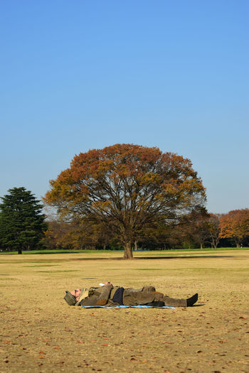 a man lay down in public park with big tree Autumn BIG Clear Sky Concept Creative Day Grass Ground Idea Lay Down Leaves Lifestyles Living Nature Outdoors Park People Public Relax, Sky Sleep Think Tree