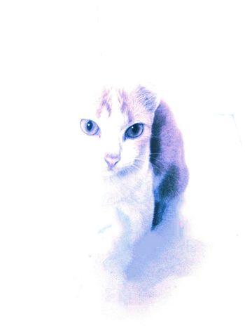 Animal Animal Photography Cat Cats Paint Pretty Cat Save Animals Tshirt Design First Eyeem Photo