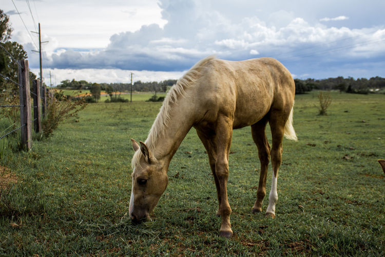 Baby horse eating grass Animal Baby Baby Horse Beautifil Brown Cute Domestic Animals Farm Grass Green Mammal Mare Nature Outdoors Pony Ranch Young
