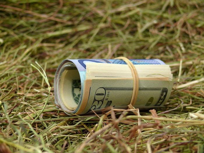 Arm Sein Close-up Curency Day Geld Wie Heu Grass Heu Hey  Money Money To Burn No People Outdoors Reich Sein Rich US Dollars Usdollar Währung