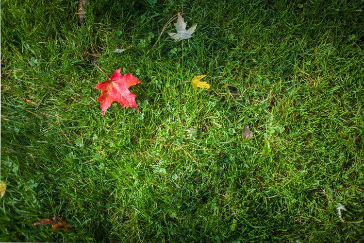 5dMarkⅡ Autumn