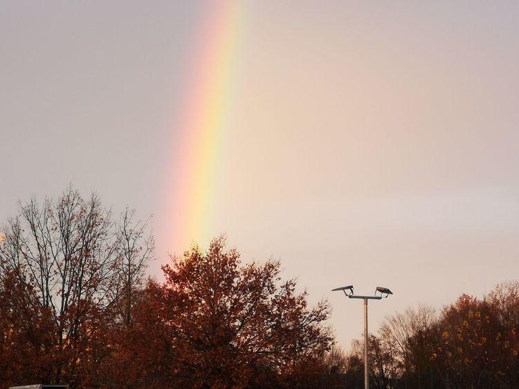 Hoffe der bringt mir mal ein wenig Glück Tree Sunset Bird Multi Colored Rainbow Flying Silhouette Weather Sky