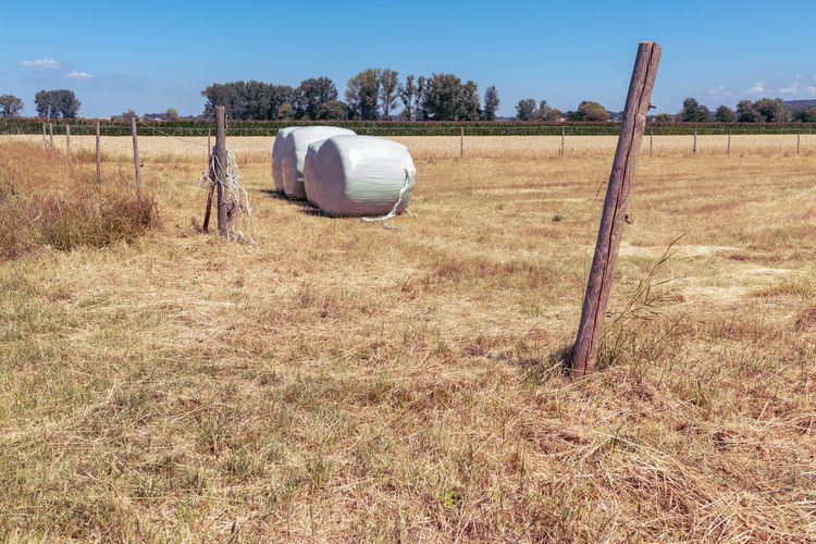 garbage can on field against sky Barrier Boundary Day Environment Feld Fence Field Grass Juli Land Landscape Nature No People Non-urban Scene Outdoors Plant Sky Solitärbäume Sunlight Tranquil Scene Tranquility Tree Wood - Material