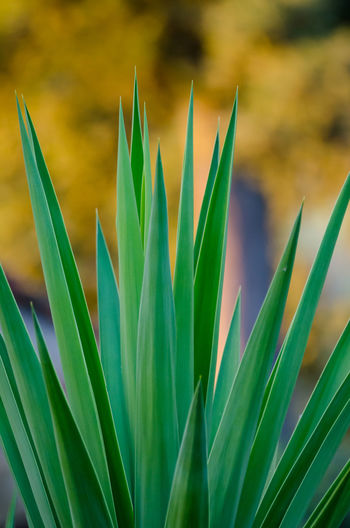 Beauty In Nature Bird Of Paradise - Plant Close-up Day Flower Focus On Foreground Fragility Freshness Green Color Growth Leaf Nature No People Outdoors Plant