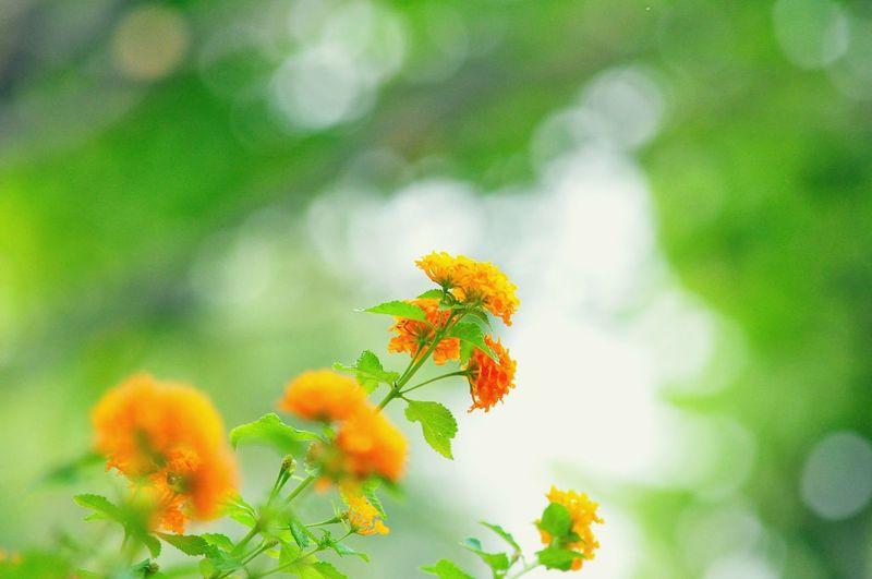 Orange flowers growing at park