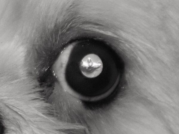 A dogs eye Eye Domestic Close-up Pets Domestic Animals Full Frame No People Looking At Camera Animal Animal Eye Eyeball Eyesight