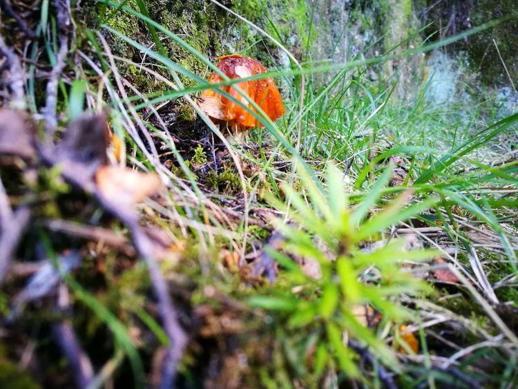 Abel Tasman Nationalpark Beauty In Nature Mushroom Try New Things Nice To See