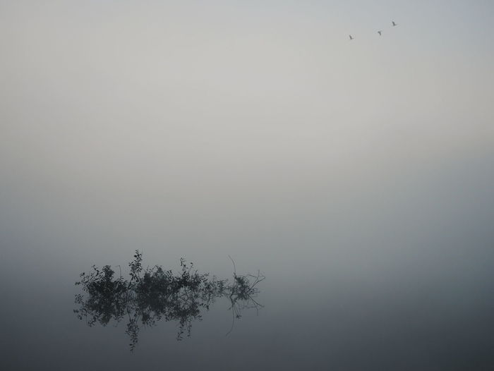 Bird Tree Water Flying Fog Silhouette Lake Reflection Sky Animal Themes