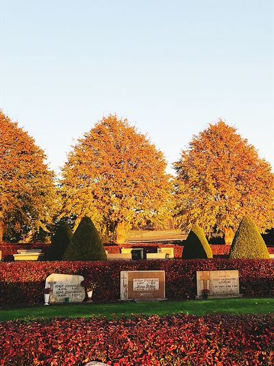 Autumn Change Leaf Tree Tombstone Cemetery Maple Tree Outdoors No People Nature Tranquility Built Structure Day Scenics Architecture Beauty In Nature Sky