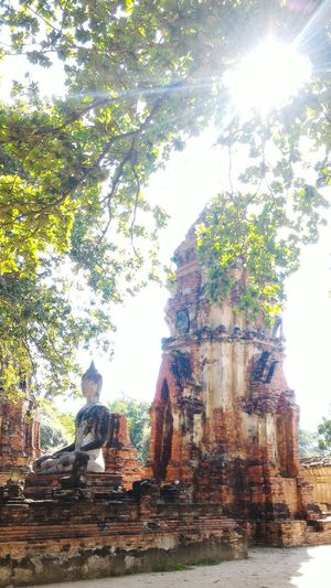 one day in Ayutthaya Tree Sunlight Religion Sky Architecture Building Exterior Built Structure