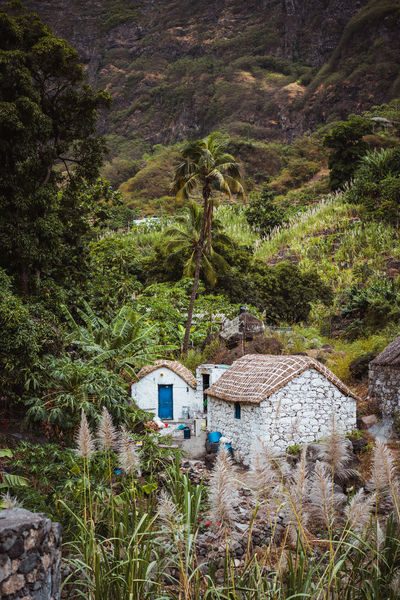 Stone houses in local style with straw covered roofs and blue windows between lush green vegetation and mountain landscape. Santo Antao Cape Verde. Vertical vintage shot. Atlantic Cape Verde Gorge Holiday Local Africa Arhipelago Arid Climate Authentic Cabo Verde Canyon Destination Dwelling Hill House Localstyle Mountainpass Plantation Stonehouse Sugarcane Tropical Unique Vacation Vegetation Village