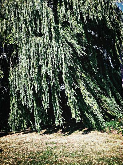 ..we Blew This Day Away.. EyeEm Nature Lover Trees The willow dancing in the wind