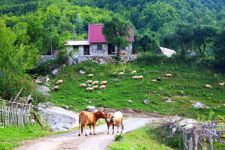 Love Albania
