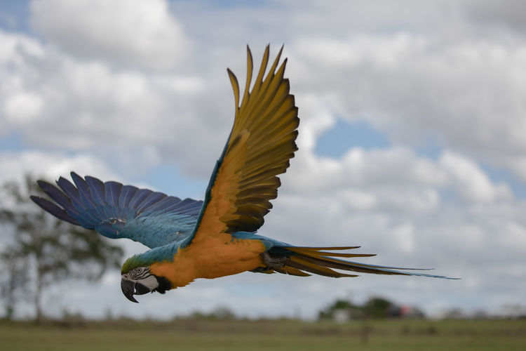 View of bird flying against sky