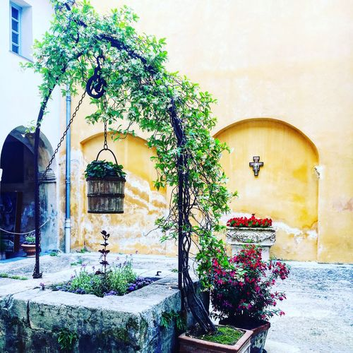 A wonderful place Getting Inspired Monastère Flower