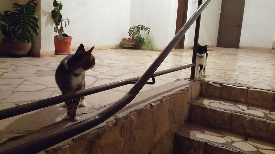 Catslife Cat♡ Cat Lovers