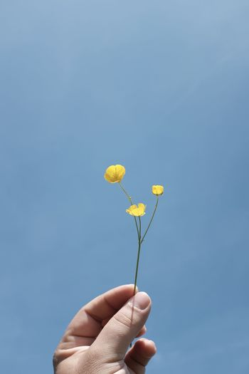 Cropped hand holding buttercup against sky on sunny day