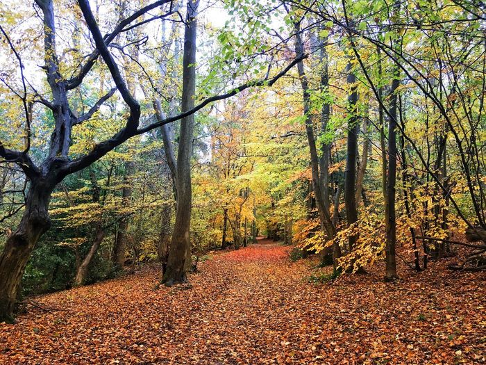 Autumn in the woods Tree Nature No People Day Beauty In Nature Outdoors Autumn Forest