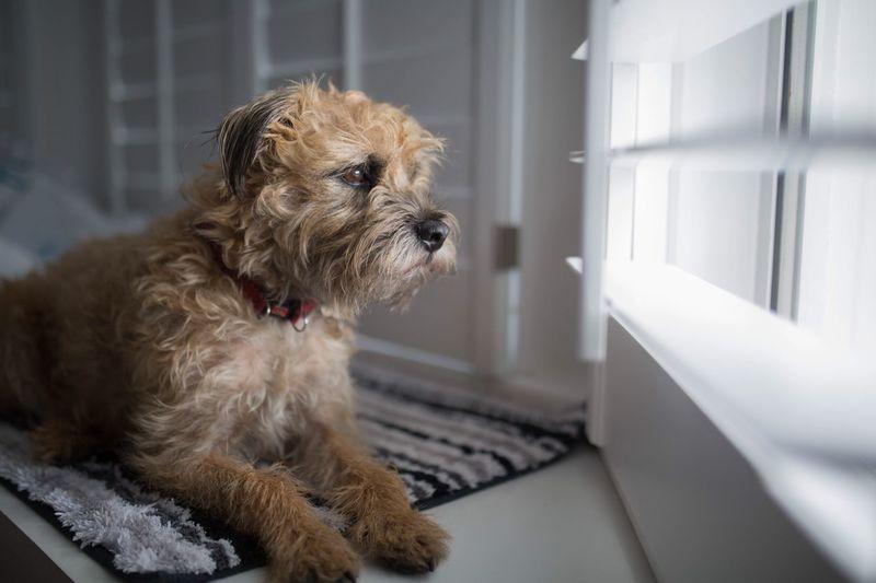 Dog Watchdogs