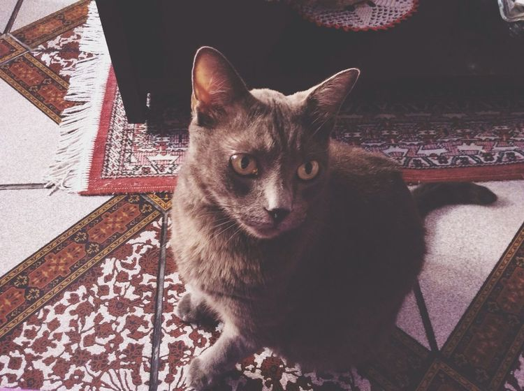 Cat♡ Gatos