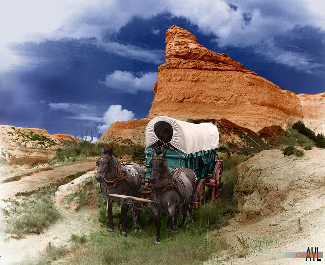 Conestoga Wagon on the Oregon Trail (re-enactment), colorized by Alex Y. Lim Conestoga Wagon Oregon Trail Beauty In Nature Cloud - Sky Colorized Domestic Animals Horse Landscape Nature Outdoors Scenics