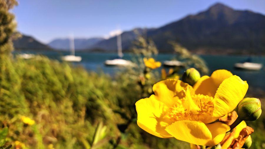 Yellow flower -