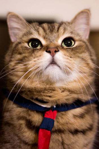 A Cat Animal Themes Cat Catphotography Coffee Cat Domestic Animals Domestic Cat Friends Cat Looking At Camera No People One Animal Persian Cat  Pets 猫 키티 ねこ 貓 Kitten Cat Photography 水手服 セーラー服 Sailor Suit かわいい Cats Of EyeEm 嚕嚕呼嚕
