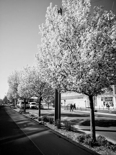 Flowered Trees Springtime Sunlight, Shades And Shadows Blackandwhite Photography Trees Road Empty Road Road Marking Diminishing Perspective Building