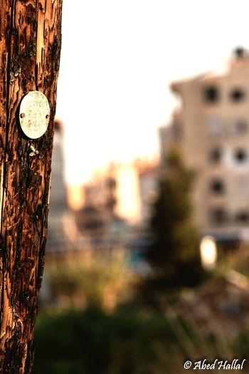 Bokeh Beirut Morning Lebanon Wood City
