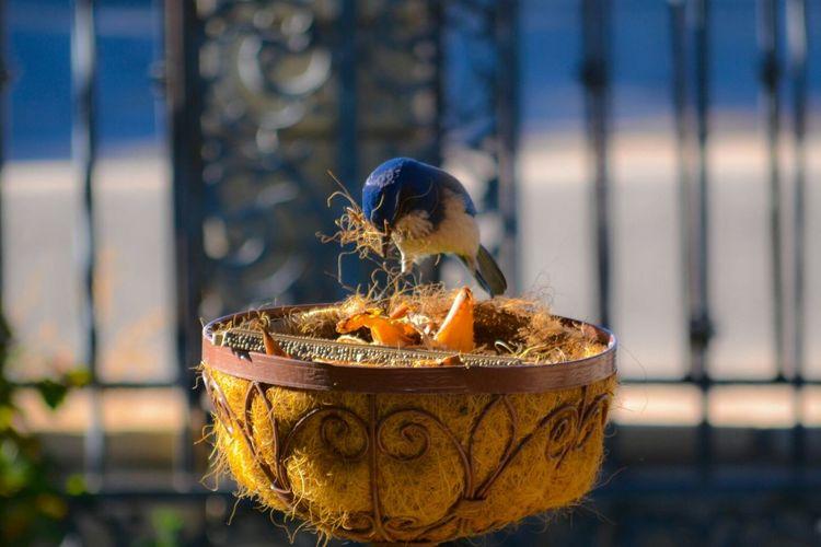 Close-up of bird making nest in flower pot
