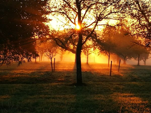 Tree Sunset Nature Field Beauty In Nature Outdoors Sunlight Tranquil Scene Scenics No People Silhouette Landscape Fog Sky Day Eye For Photography EyeEm Selects Background Backgrounds EyeEm Best Shots EyeEm Nature Lover EyeEm Best Shots - Nature EyeEmNewHere Beauty In Nature
