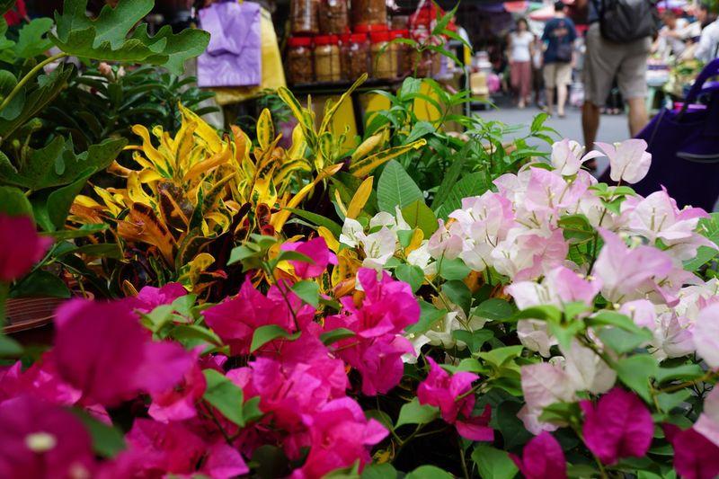 Flowers Flowering Plant Flower Plant Freshness Fragility Market Petal Nature Outdoors